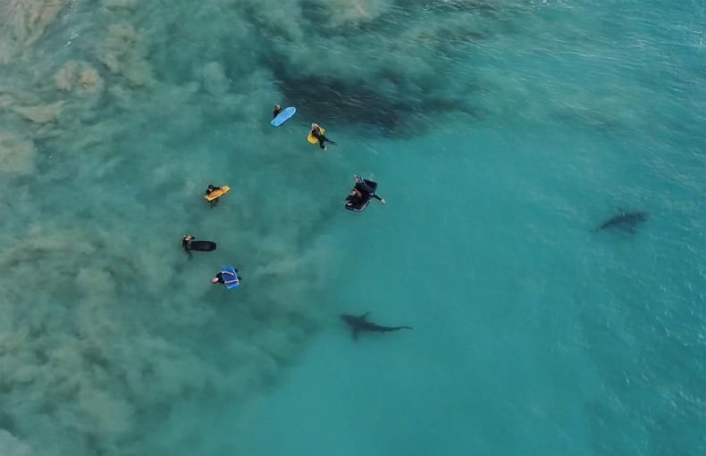Niesamowite nagranie z rekinami w roli głównej - GospodarkaMorska.pl