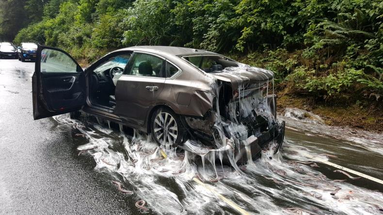 Ponad 3 t węgorzy wiły się na drodze. Wypadek ciężarówki w USA (foto, wideo) - GospodarkaMorska.pl