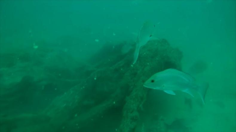 U wybrzeży Alabamy odkryto podwodny las (wideo) - GospodarkaMorska.pl