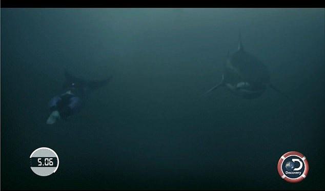 Michael Phelps kontra rekin. Zgadnijcie, kto wygrał (wideo) - GospodarkaMorska.pl