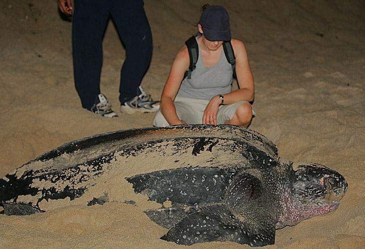 W woj. łódzkim odkryto szczątki żółwia morskiego sprzed 148 mln lat - GospodarkaMorska.pl
