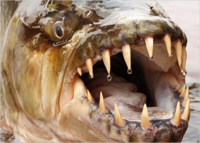 Brytyjczyk złowił jedną z najniebezpieczniejszych ryb świata (wideo) - GospodarkaMorska.pl