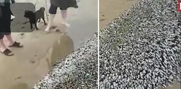 """Tajemniczy """"potwór"""" na brytyjskiej plaży (wideo) - GospodarkaMorska.pl"""