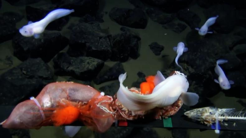 Japońscy naukowcy zajrzeli 8 km pod powierzchnię Pacyfiku. Oto, co znaleźli (wideo) - GospodarkaMorska.pl