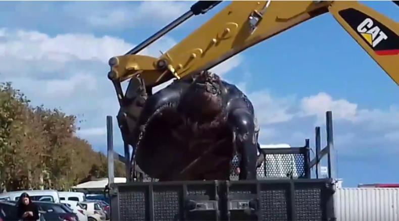 W Hiszpanii morze wyrzuciło na brzeg olbrzymiego żółwia. Ważył prawie tonę (foto, wideo) - GospodarkaMorska.pl