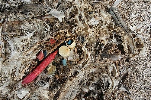 Przez tony plastiku ginie milion zwierząt w oceanach rocznie! (wideo) - GospodarkaMorska.pl