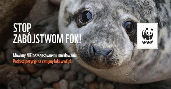 WWF - petycja ratująca foki - GospodarkaMorska.pl