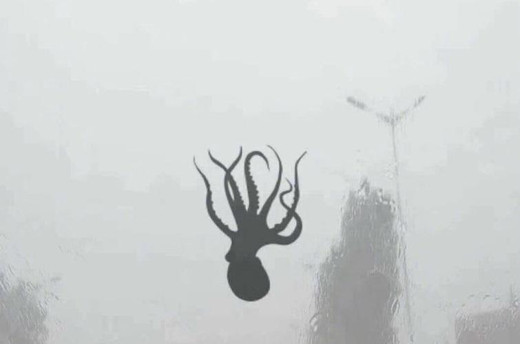 W Chinach spadł deszcz ośmiornic i rozgwiazd (foto) - GospodarkaMorska.pl