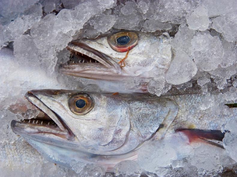 Włochy/Raport: Chemicznie odświeżane stare ryby to tylko niektóre oszustwa w produkcji żywności - GospodarkaMorska.pl