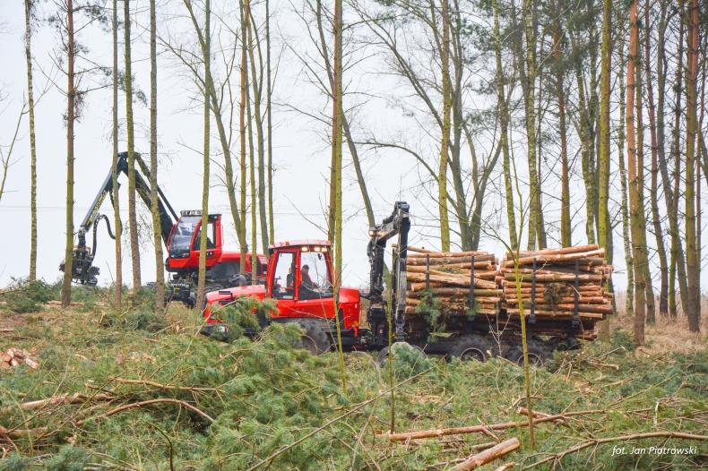 Do 28 lutego potrwa wycinka lasu w związku z przekopem przez Mierzeję Wiślaną (foto) - GospodarkaMorska.pl