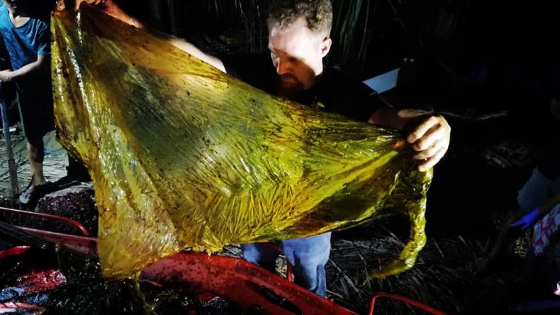 40 kg plastikowych torebek w brzuchu wieloryba (foto) - GospodarkaMorska.pl
