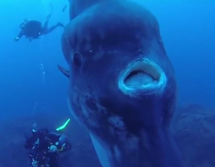 To jedna z najdziwniejszych ryb oceanów (wideo) - GospodarkaMorska.pl
