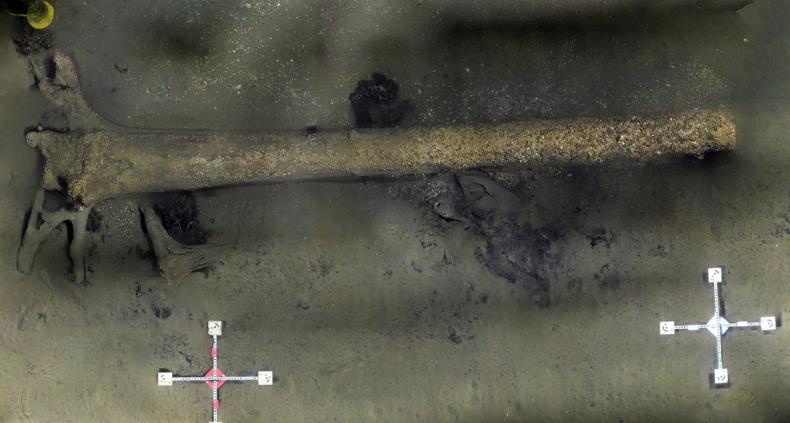 Zbadali zatopiony w Bałtyku las sprzed 10 tys. lat - GospodarkaMorska.pl