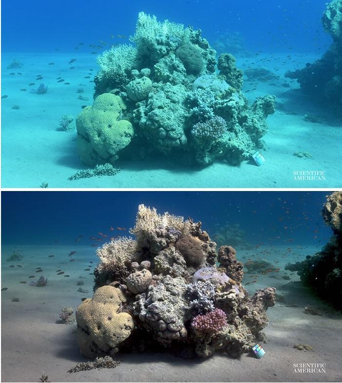Naukowcy stworzyli algorytm usuwający wodę z podwodnych zdjęć (foto, wideo) - GospodarkaMorska.pl