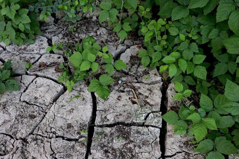 WWF: Ratunek przed suszą - nie deszcz a polityka klimatyczna - GospodarkaMorska.pl
