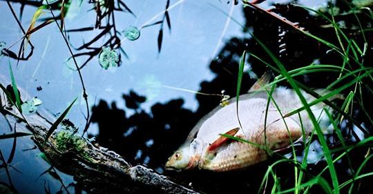 Zagłada ryb to efekt uboczny pracy elektrowni z otwartym systemem chłodzenia - GospodarkaMorska.pl