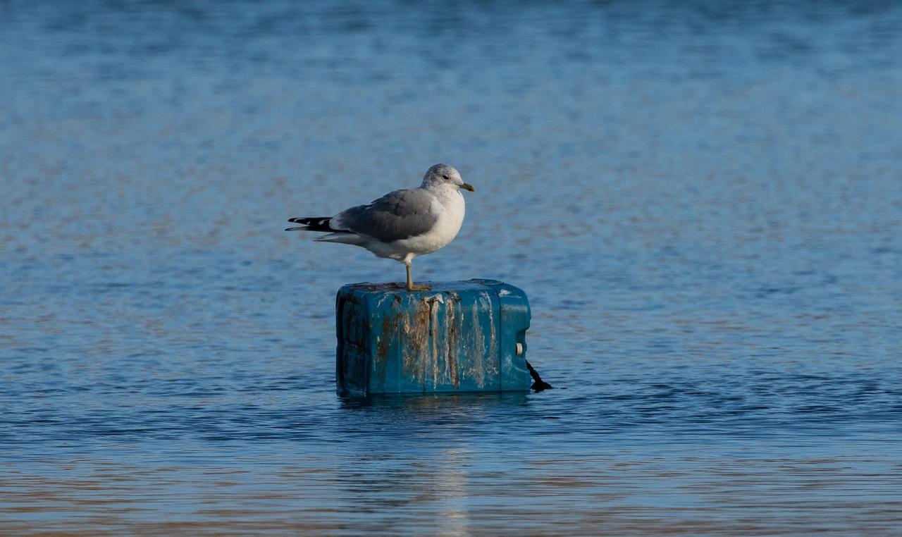 seagull-4711082_1280.jpg