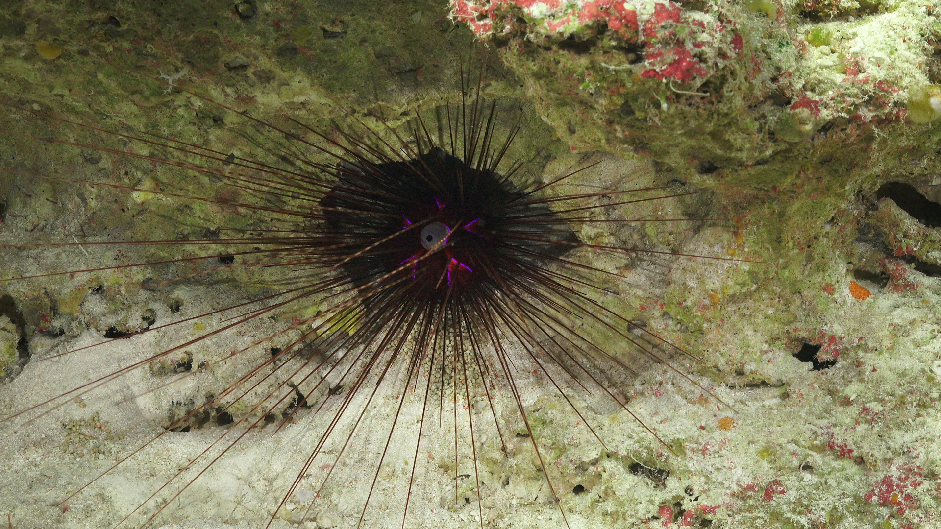 FK200429-SOI-43602Z-Urchin-Dive365.jpg