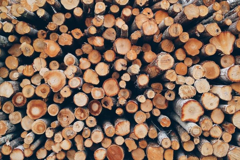 Naukowcy: spalanie drewna nie jest zieloną energią - GospodarkaMorska.pl