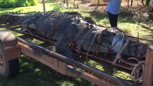 Złapano jednego z największych krokodyli na świecie - GospodarkaMorska.pl