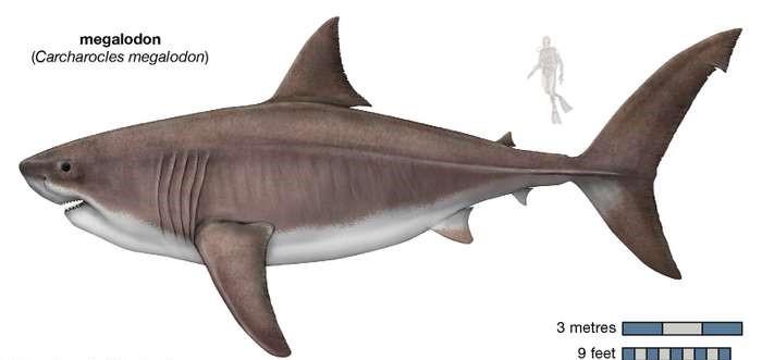 Wiemy jak wielki był największy rekin w historii - GospodarkaMorska.pl