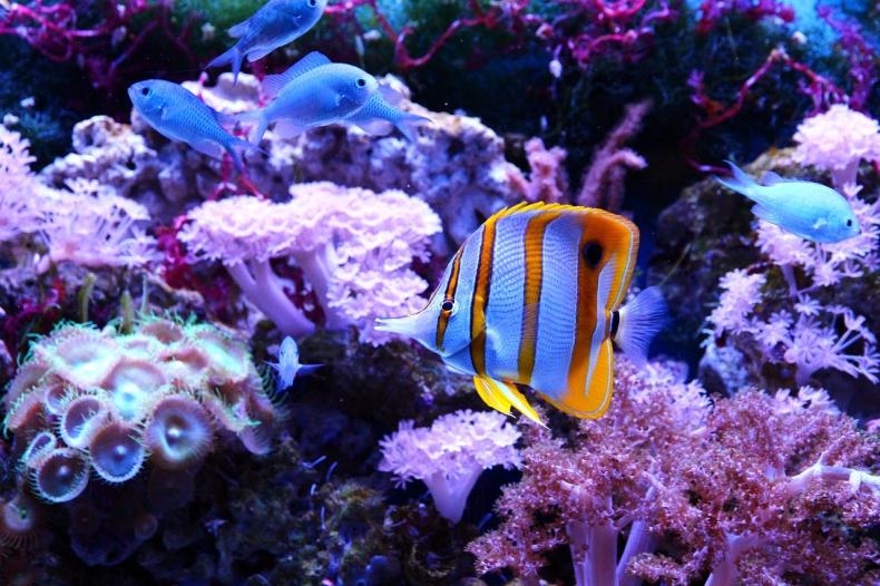 Jeśli nie zmniejszymy emisji, rafy koralowe znikną do końca tego wieku, a ryb będzie coraz mniej - GospodarkaMorska.pl
