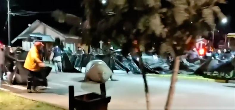 Wielki słoń morski siał postrach na ulicach nadmorskiego kurortu [wideo] - GospodarkaMorska.pl