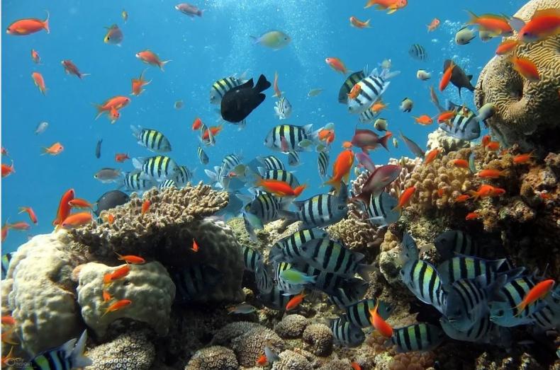 Wielka Rafa Koralowa straciła już połowę koralowców - GospodarkaMorska.pl