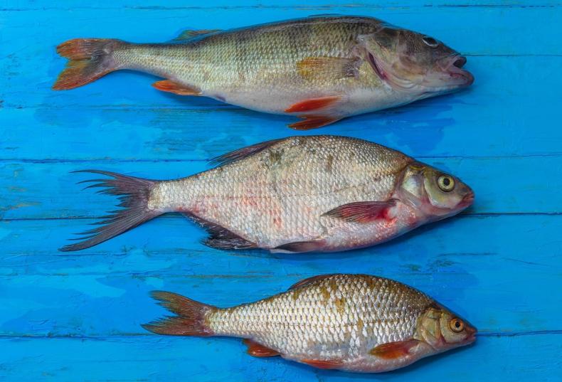 Morski Instytut Rybacki: znakowanie ryb - GospodarkaMorska.pl