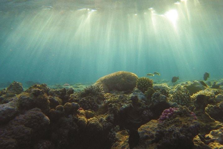 Po raz pierwszy udało się zmapować osady morskie pod względem różnorodności biologicznej - GospodarkaMorska.pl