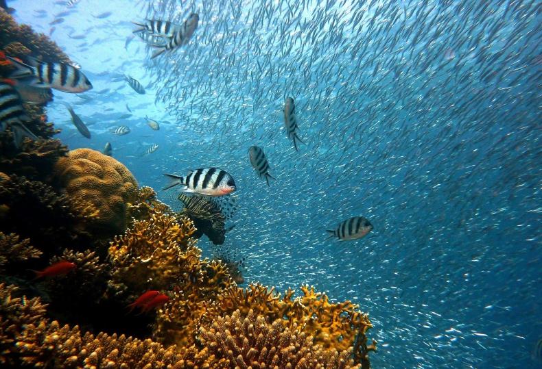 Niesamowite odkrycie w Australii - rafa koralowa wyższa niż Empire State Building - GospodarkaMorska.pl