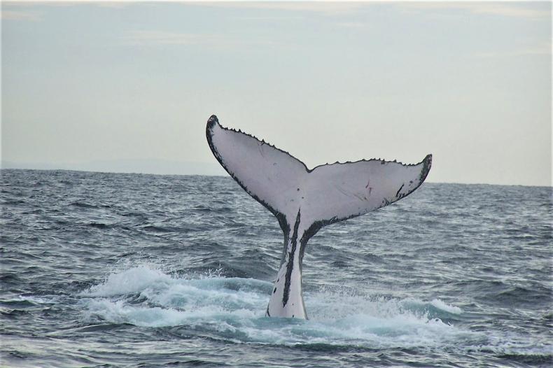 """Wieloryb """"pożarł"""" kajakarki [wideo] - GospodarkaMorska.pl"""