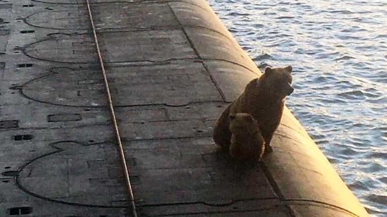 Niedźwiedzica i jej młode wdrapały się na okręt podwodny, zostały zastrzelone (wideo) - GospodarkaMorska.pl