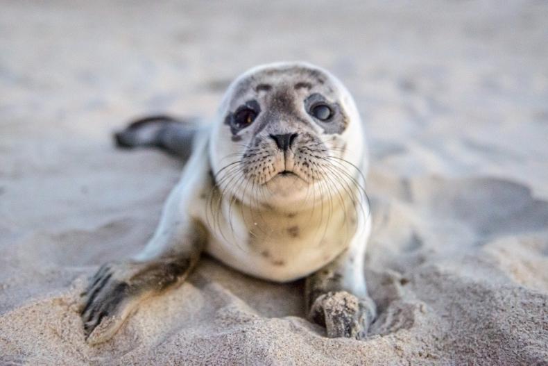 Zagrożone gatunki morskie mogą zostać zarażone SARS-CoV-2 - GospodarkaMorska.pl