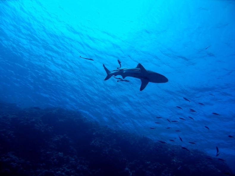 Rekin zabił 55-latka w Australii - GospodarkaMorska.pl