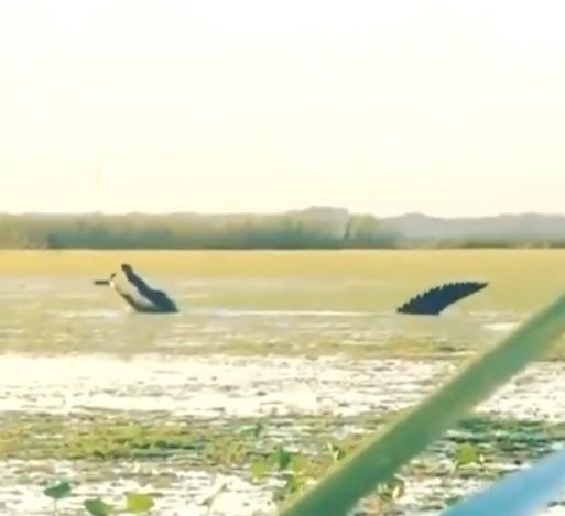Powrót dinozaurów na Florydzie? Zobacz niezwykłe nagranie (wideo) - GospodarkaMorska.pl