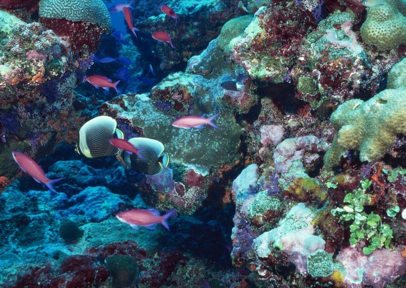 Zanikanie raf koralowych wskutek ocieplenia i zakwaszenia oceanu powoduje erozję wybrzeży - GospodarkaMorska.pl