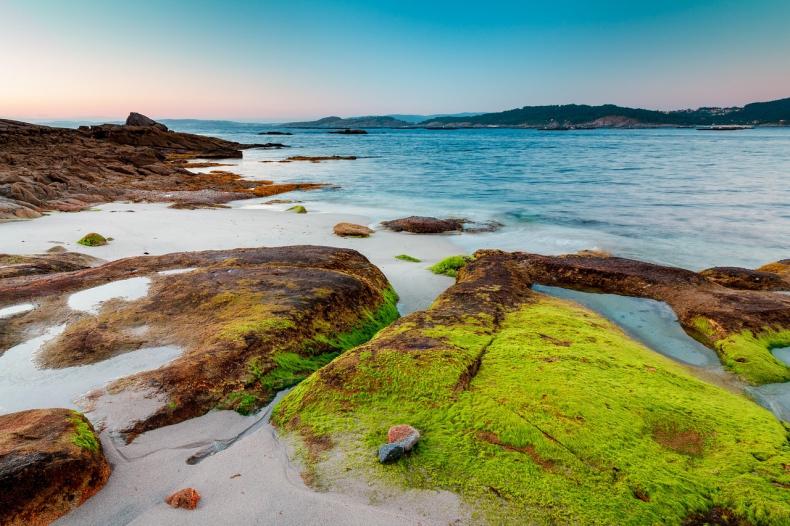 Fala oceanicznych upałów wywołała toksyczne zakwity glonów - GospodarkaMorska.pl