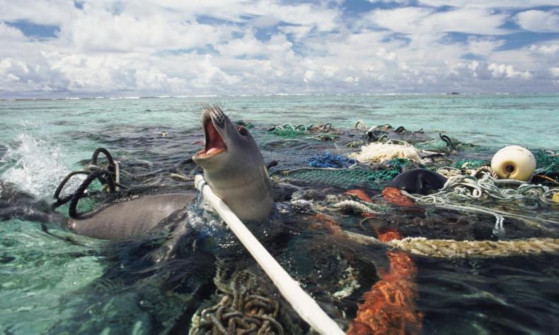 Badanie: Jaki rodzaj odpadów w oceanach jest najbardziej niebezpieczny? - GospodarkaMorska.pl