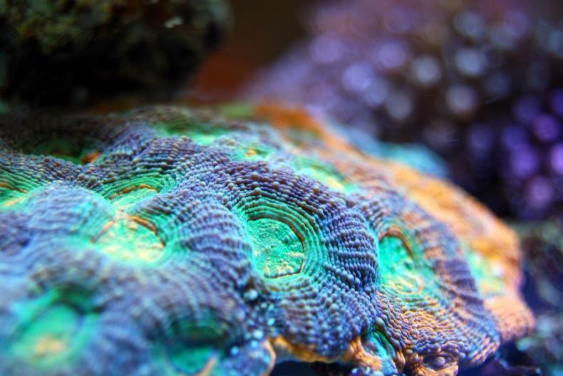 12 nowych gatunków ukrywa się w głębinach Atlantyku - GospodarkaMorska.pl