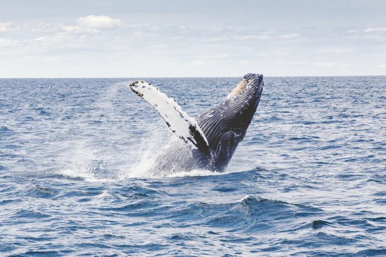 """Na pomoc oceanom - w poszukiwaniu opcji dla """"błękitnego węgla"""" - GospodarkaMorska.pl"""