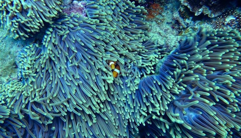 Jak rozpoznać koralowce, którym szkodzi ciepło? - GospodarkaMorska.pl