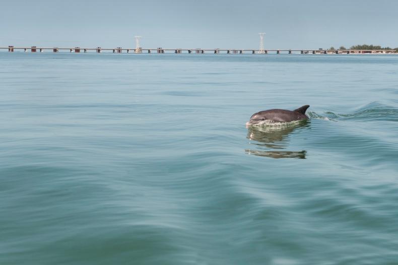 100 martwych delfinów na plaży w Mozambiku - GospodarkaMorska.pl
