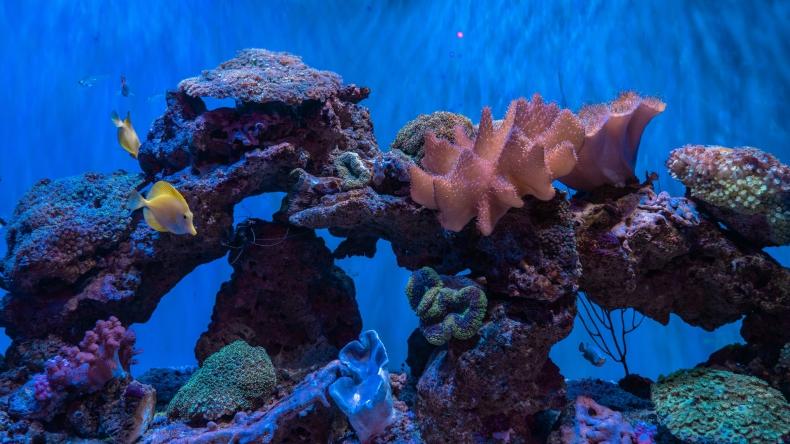 Badania żywotności koralowców w dewonie mają pomóc chronić obecnie zagrożone rafy - GospodarkaMorska.pl