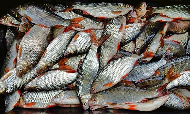 Filipiny nie zgadzają się na wprowadzony przez Chiny zakaz połowów na spornych wodach - GospodarkaMorska.pl