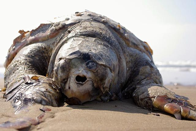 Sri Lanka: Setki martwych zwierząt morskich wyrzuconych na brzeg po katastrofie statku - GospodarkaMorska.pl