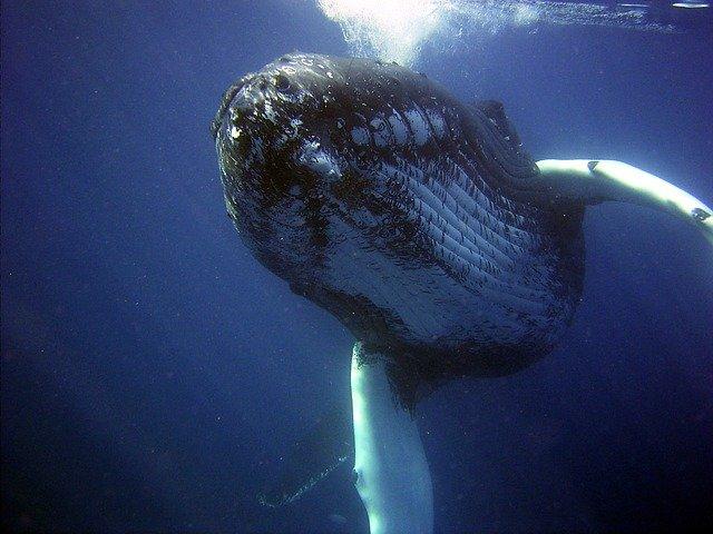 Hiszpania: Uratowano 18-metrowego wieloryba, który wpłynął do portu w Walencji - GospodarkaMorska.pl