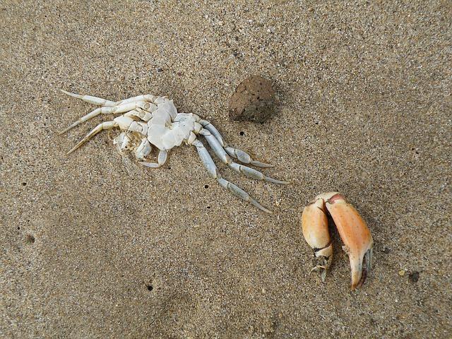 Kanada. Badanie: ponad miliard morskich stworzeń zginęło przez falę upałów - GospodarkaMorska.pl