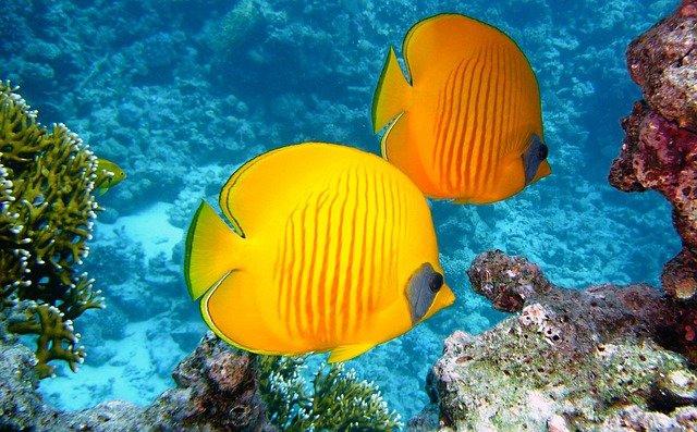 Australia: UNESCO nie umieści Wielkiej Rafy Koralowej na liście obiektów zagrożonych - GospodarkaMorska.pl