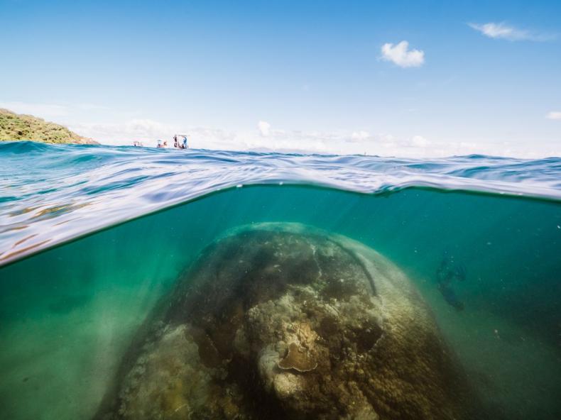 Naukowcy odkryli najbardziej rozległy koralowiec Wielkiej Rafy - GospodarkaMorska.pl